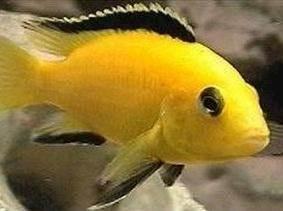 Drømmer du om akvariefisk?